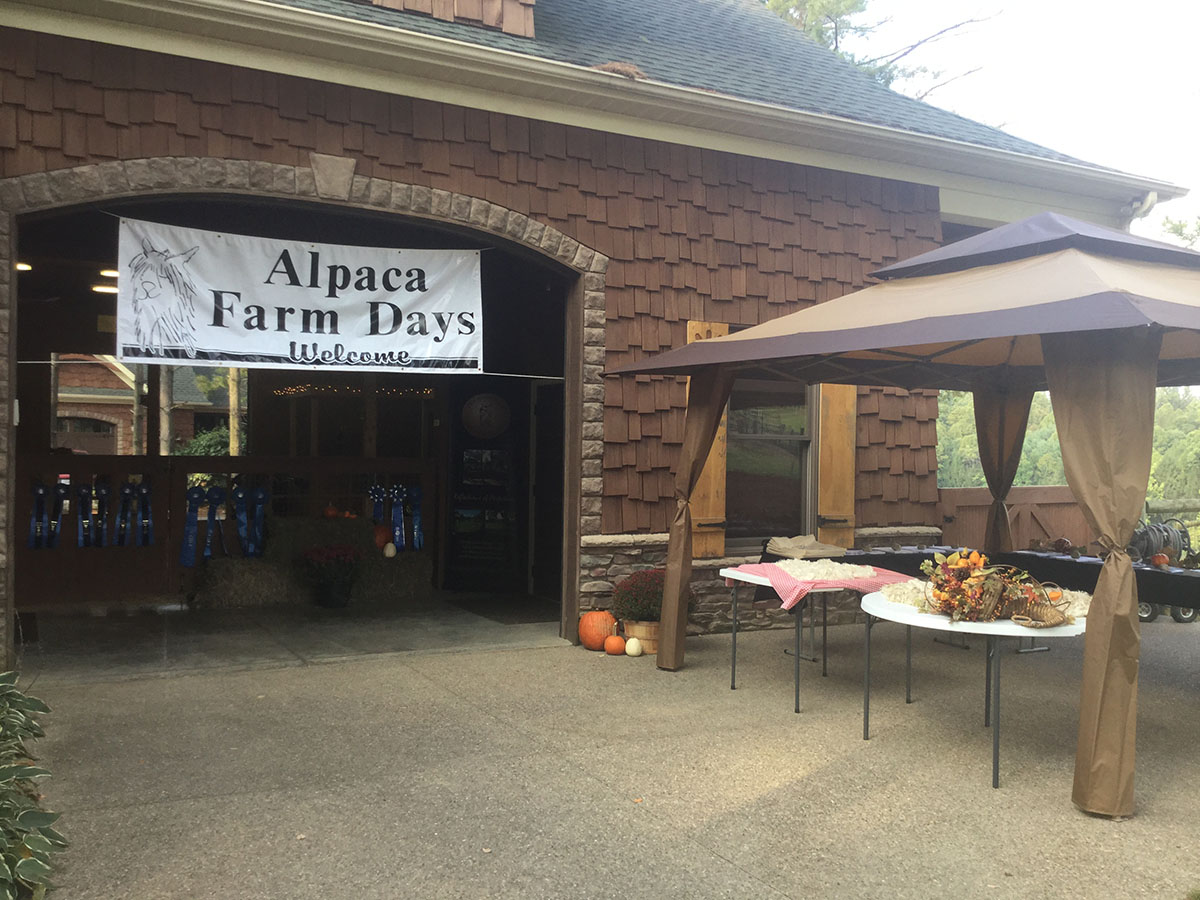 Alacas Of Spring Acres Farm Days 2