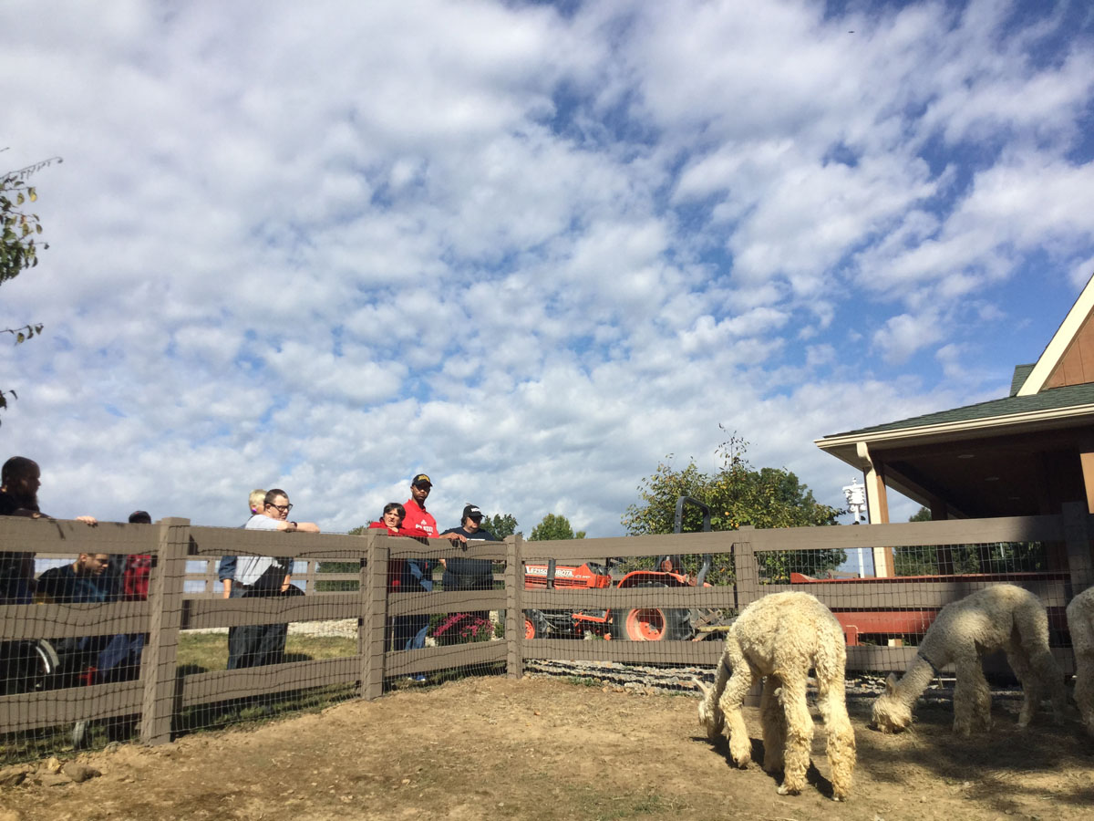 Alpacas Of Spring Acres Starlight Trip To The Farm 10.JPG