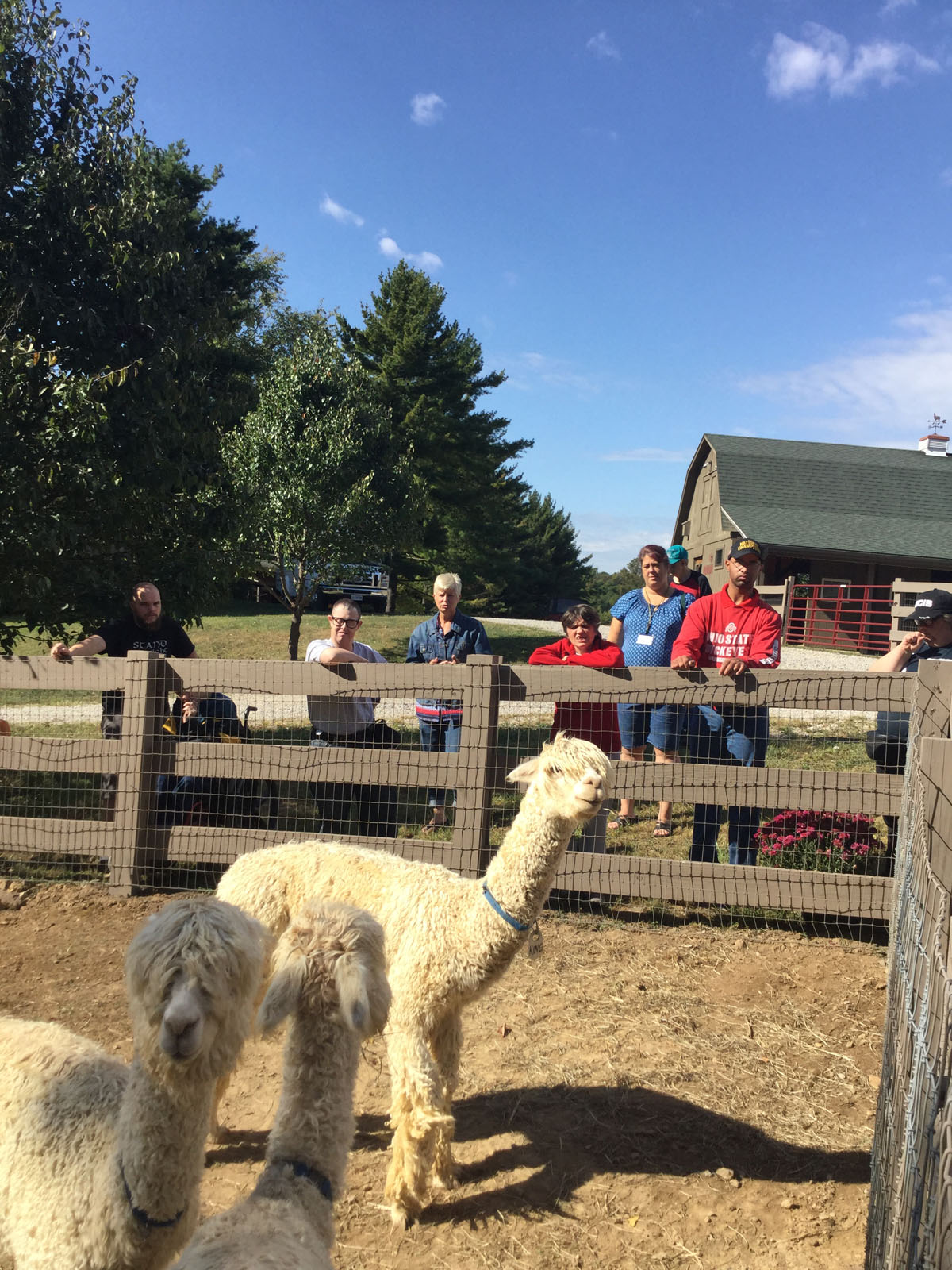 Alpacas Of Spring Acres Starlight Trip To The Farm 11.JPG