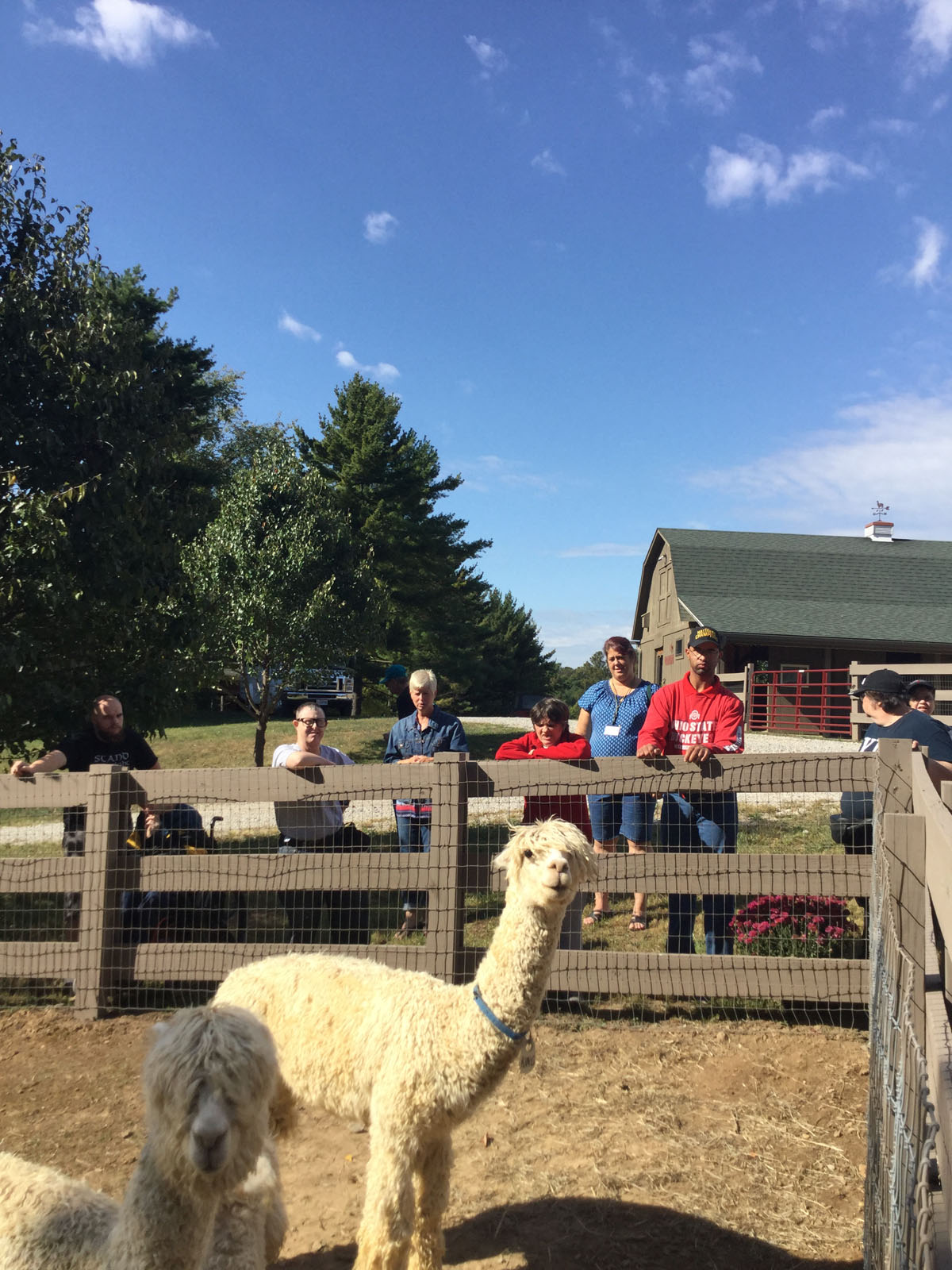 Alpacas Of Spring Acres Starlight Trip To The Farm 12.JPG