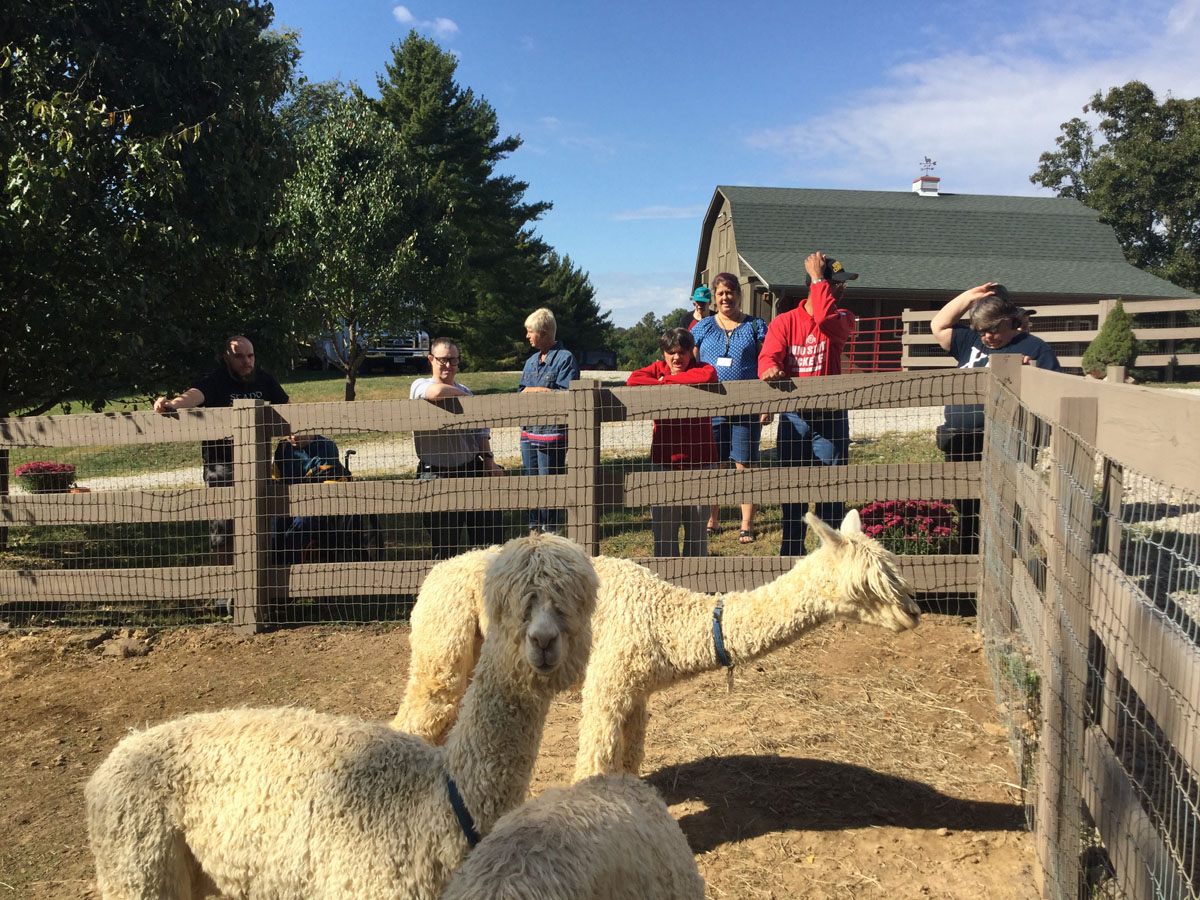 Alpacas Of Spring Acres Starlight Trip To The Farm 13.JPG