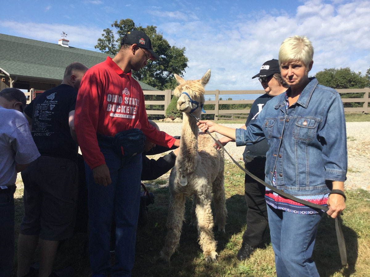 Alpacas-Of-Spring-Acres-Starlight-Trip-To-The-Farm-14