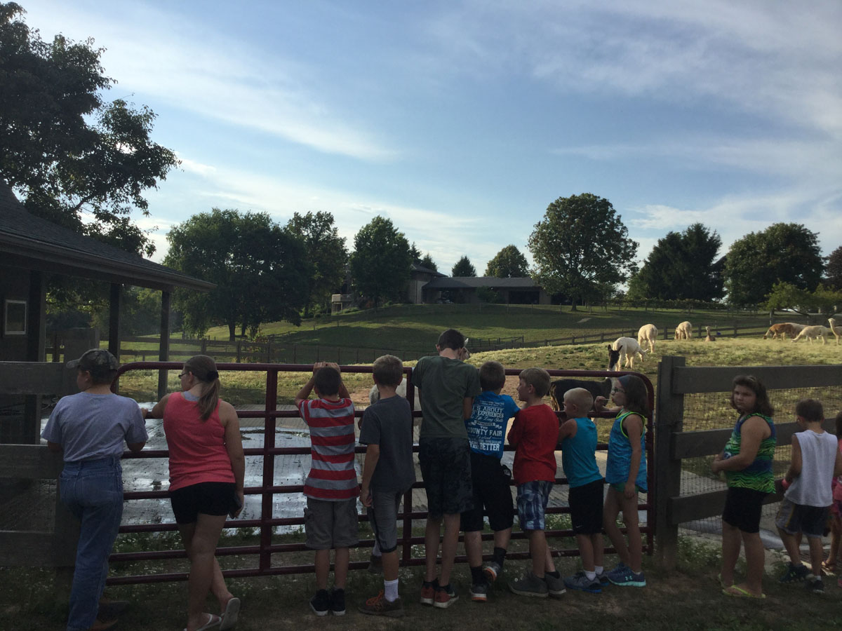 The Alpacas Of Spring Acres 2016 4H Day 9.JPG